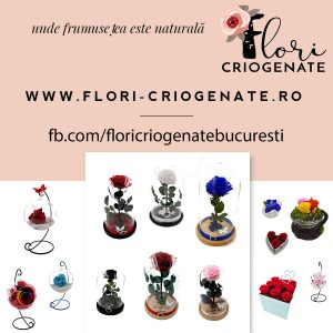 https://www.flori-criogenate.ro/